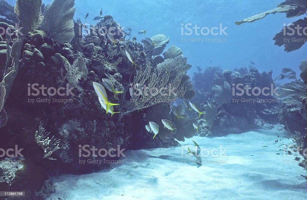 Bonaire peu reef photo libre de droits