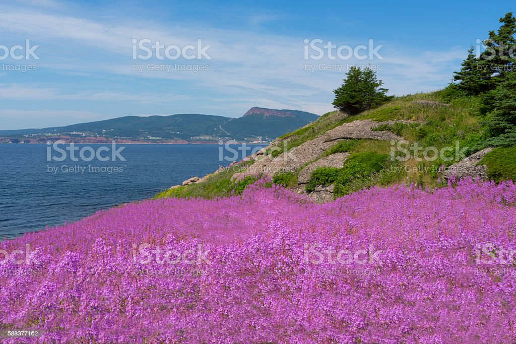 Bonaventure Island - Ile Bonaventure stock photo