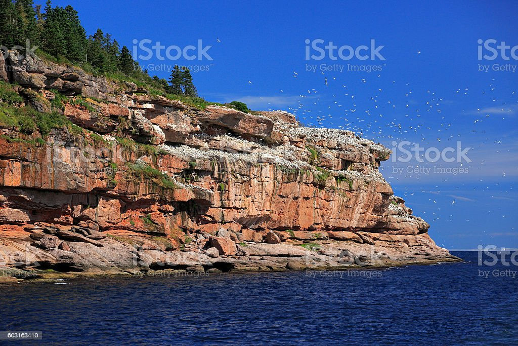 Bonaventure Island in Gaspesie, Canada stock photo
