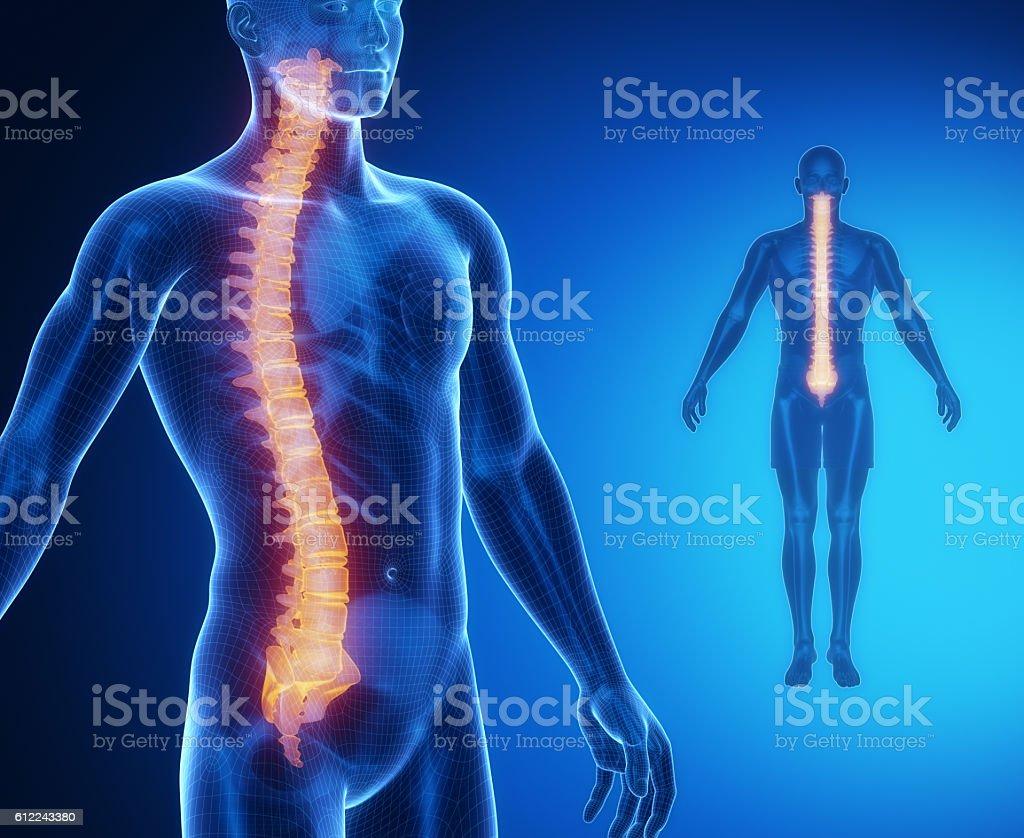 SPINE bone anatomy x-ray scan stock photo