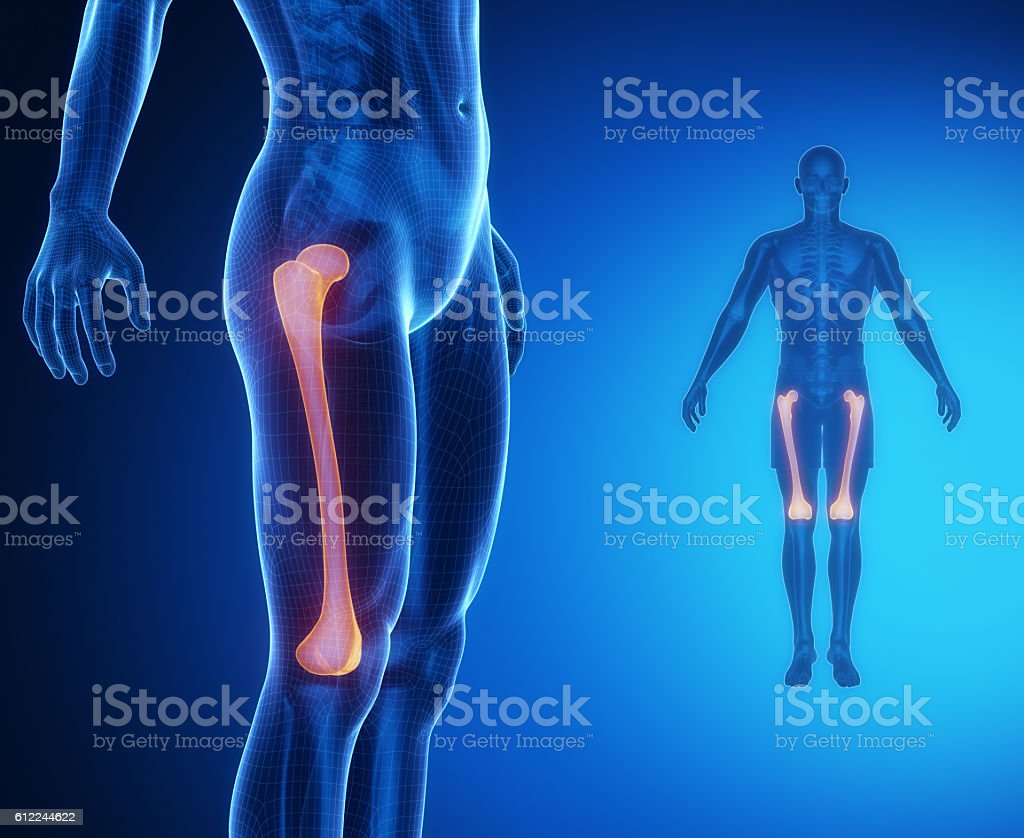 FEMUR bone anatomy x-ray scan stock photo