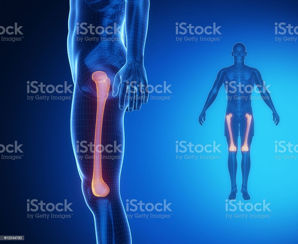 FEMUR bone anatomy x-ray scan stock photo