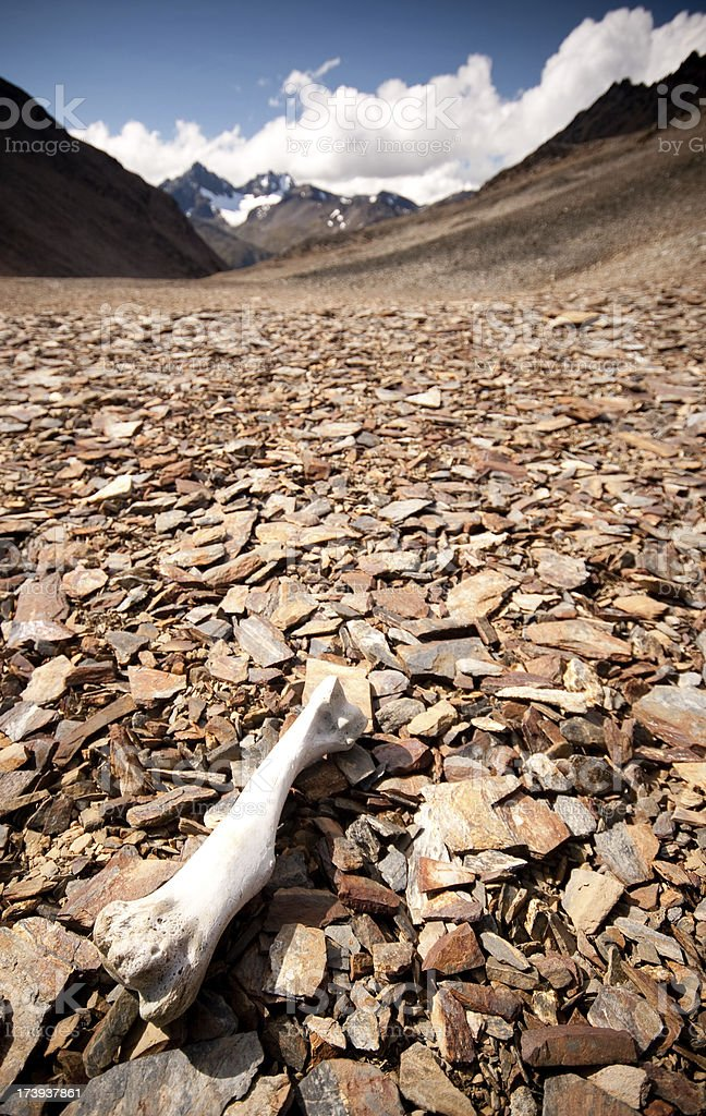 Bone Desolated in a Mountain Pass royalty-free stock photo