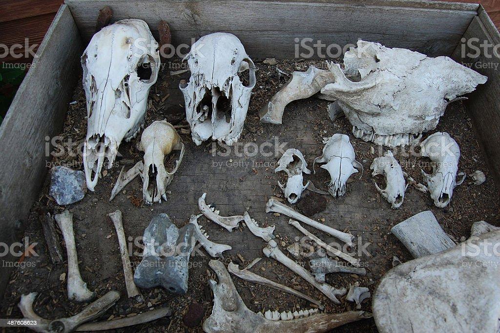 bones in a box stock photo