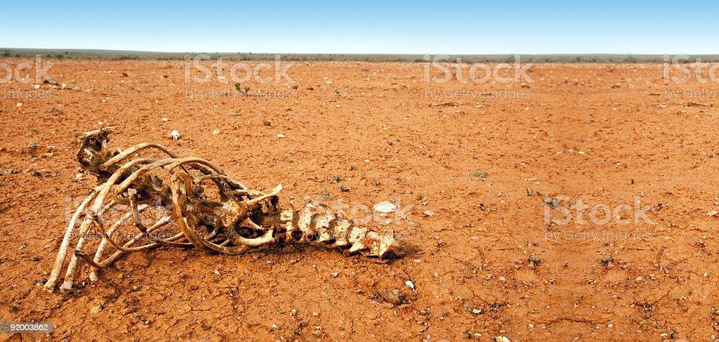 Bones in the Desert royalty-free stock photo
