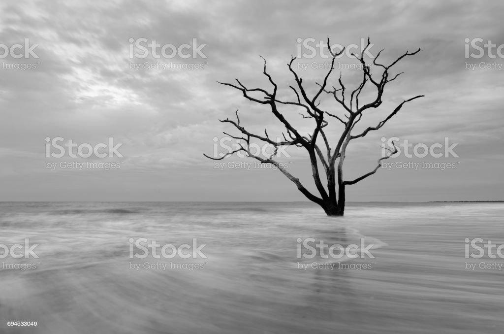 Boneyard Beach Tree stock photo
