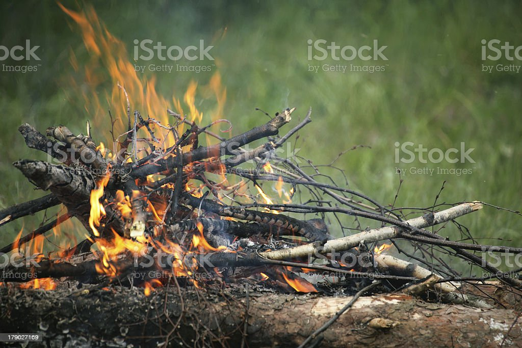 Bonfire campfire fire summer forest royalty-free stock photo