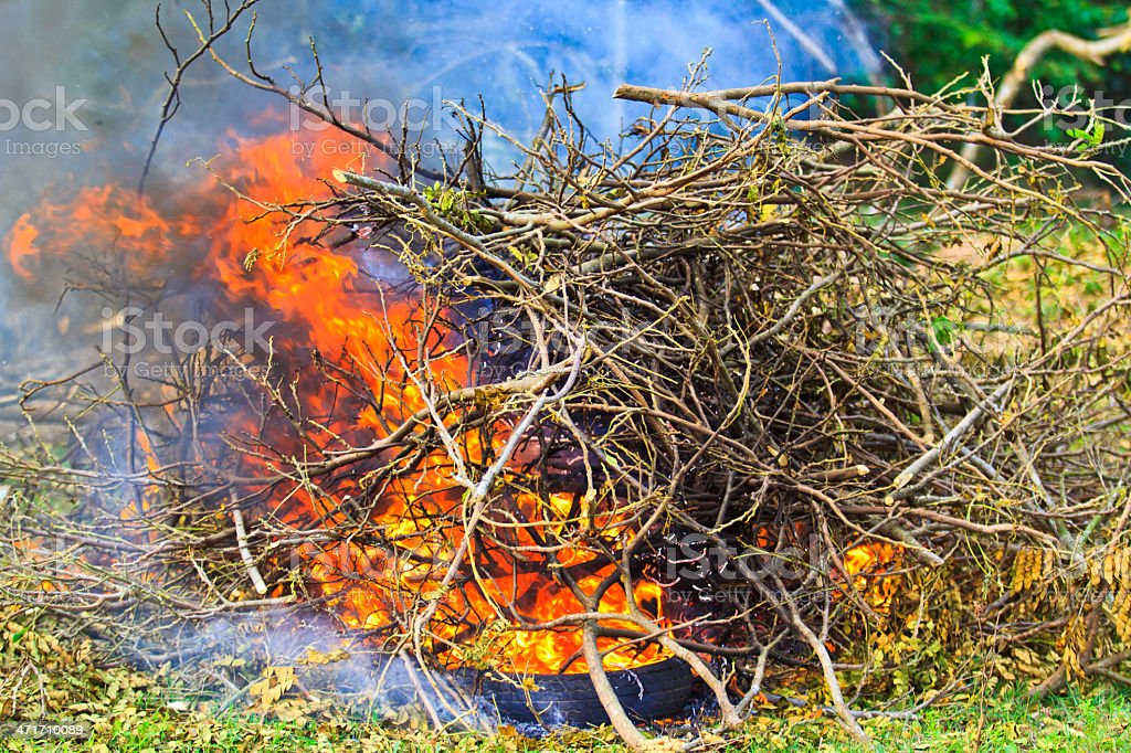 Bonfire in the forest Burning wood royalty-free stock photo