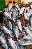 bonito fish selling