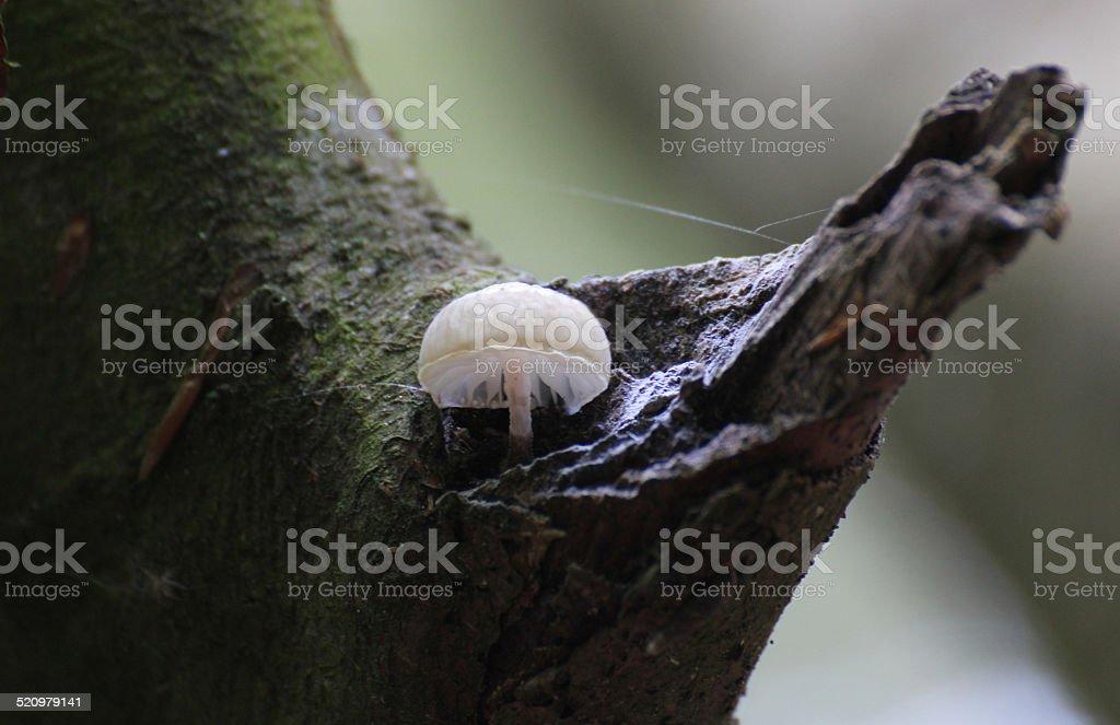 Bonnet On Wood stock photo