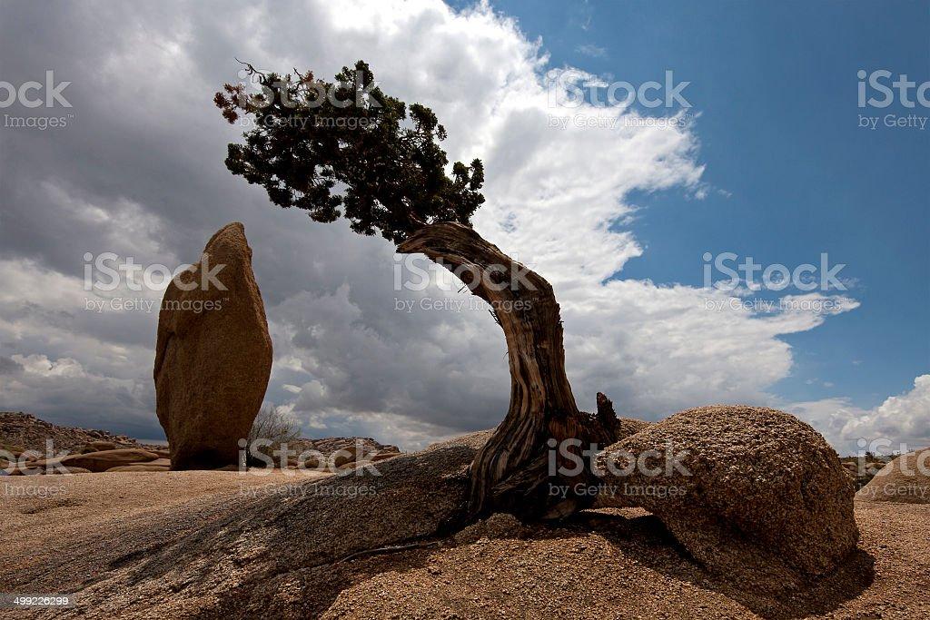 Bonsai and Balanced Rock, Joshua Tree National Park stock photo