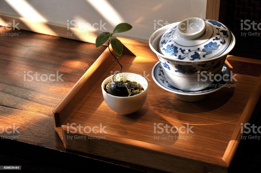 Bonsai and teapot stock photo