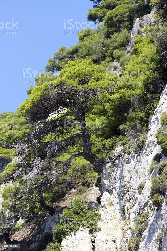 Bonsai at a cliff  (vertical picture) stock photo