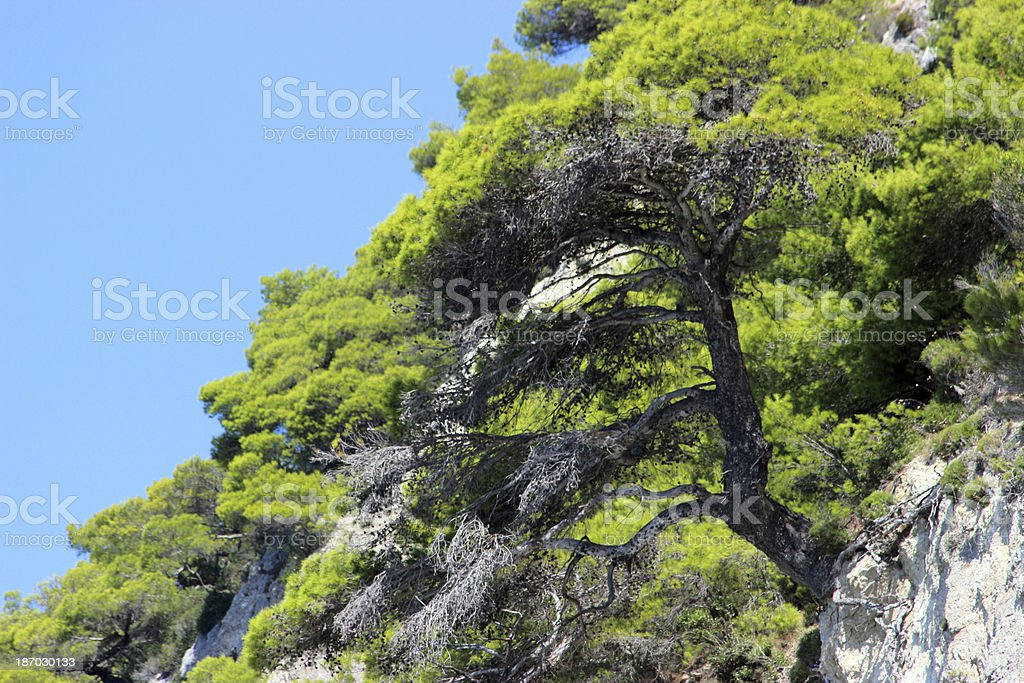 Bonsai at a cliff  (horizontal picture) stock photo