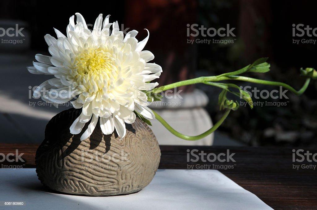 Bonsai Chrysanthemum stock photo