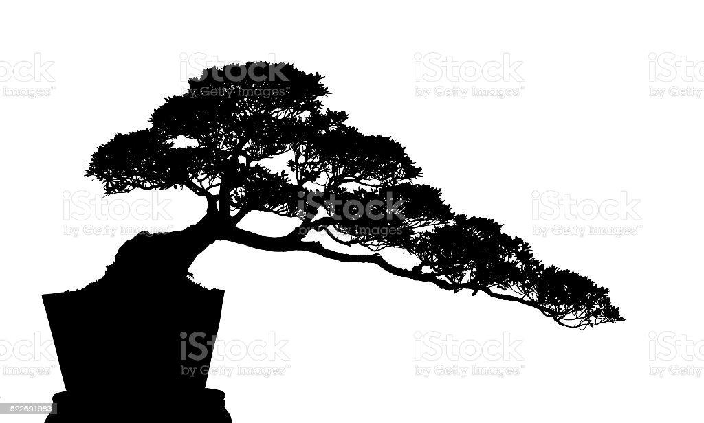 bonsai cucoloris stock photo