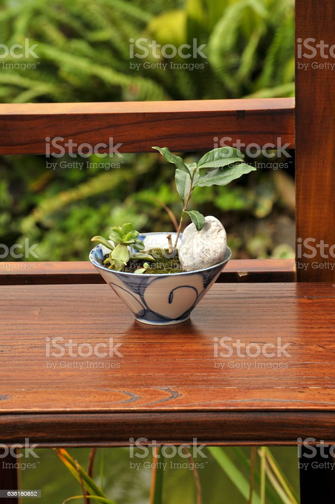 Bonsai plant on Chinese style table stock photo