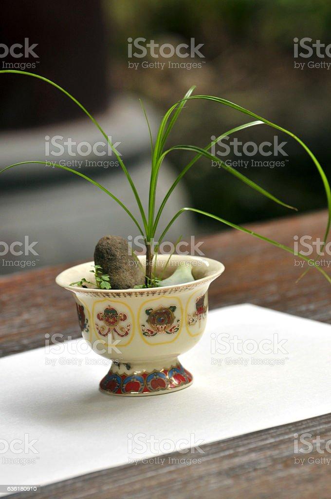Bonsai plant stock photo