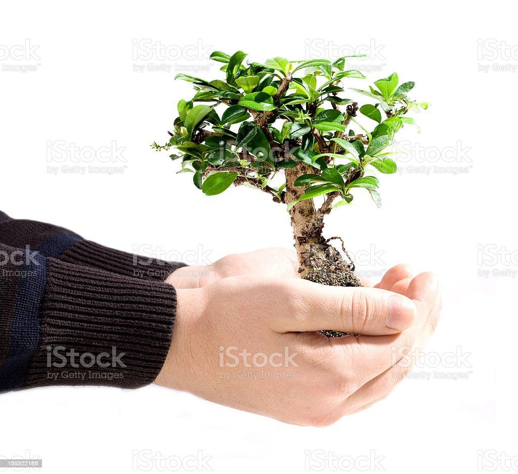 Bonsai tree in hand stock photo