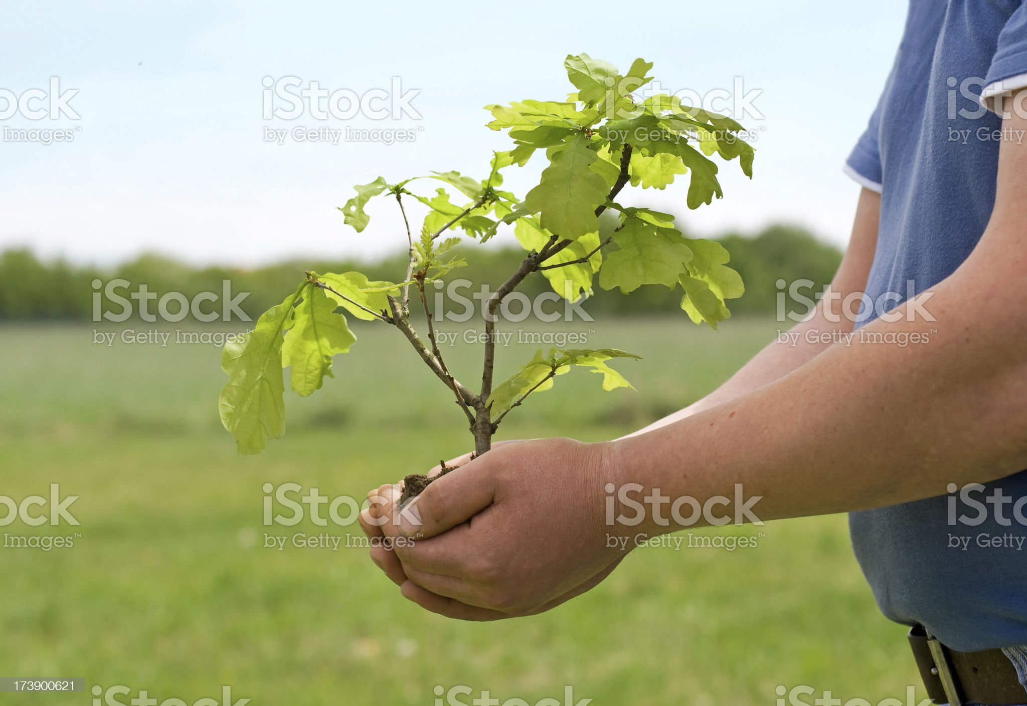 Bonsai tree in hand royalty-free stock photo