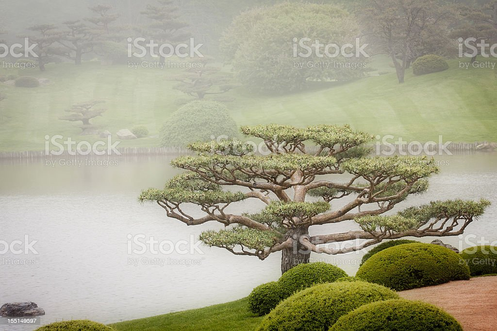 Bonsai Tree in Japanese Garden stock photo