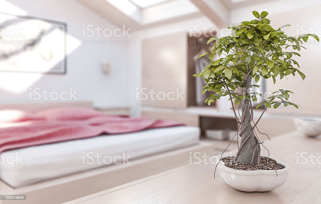 Bonsai Tree in Modern and Warm Bedroom stock photo