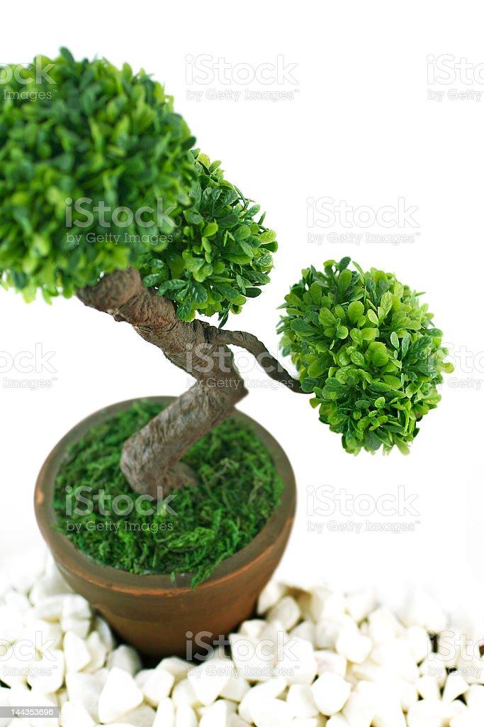 bonzai tree with macro view royalty-free stock photo