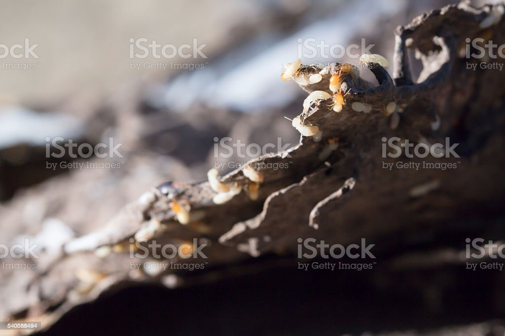 Book and scrap paper with termites damage,termites bite paper stock photo
