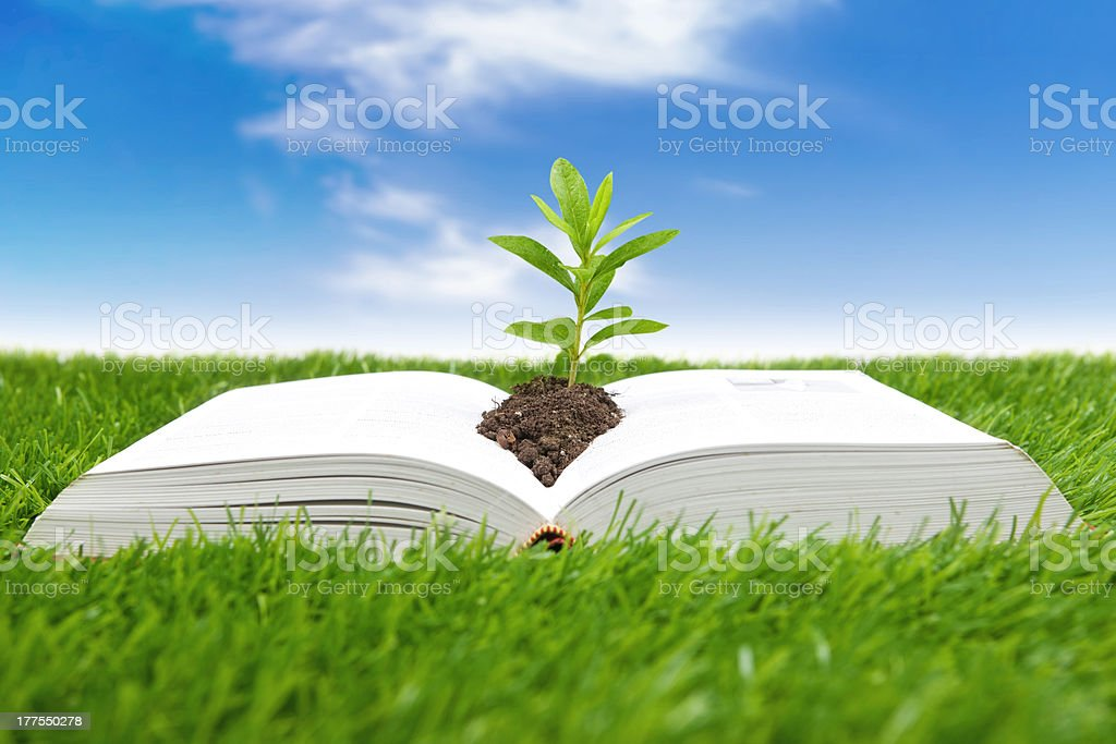 Book of Life Concept royalty-free stock photo