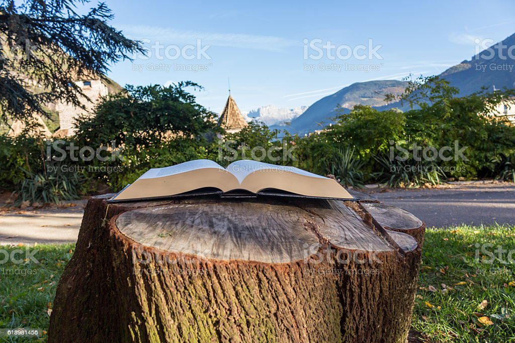 Book on tree trunk in the park stock photo