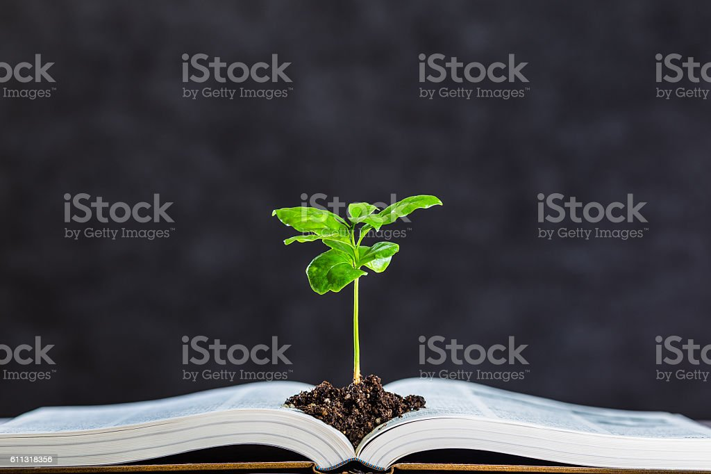 Books and plant stock photo
