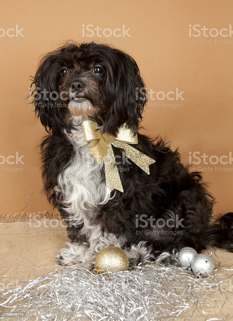 Boomer on colored background royalty-free stock photo
