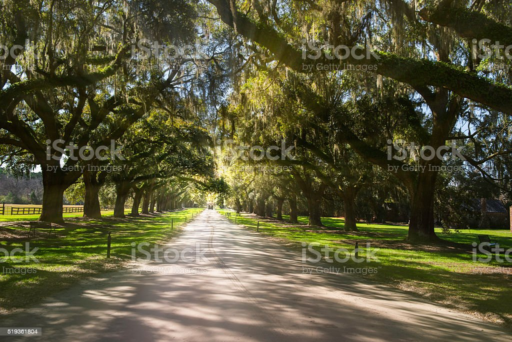 Boone Hall Plantation stock photo