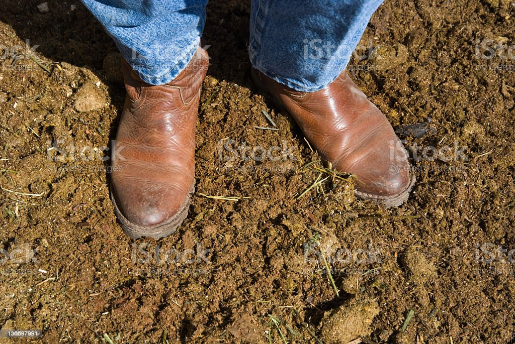 Boots Standing in Fresh Horse Manure, Close Up royalty-free stock photo