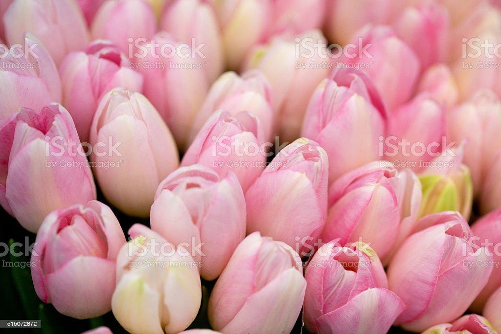 boquet of pink tulips stock photo