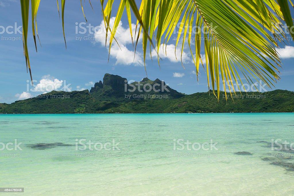 Bora Bora palm leaves stock photo