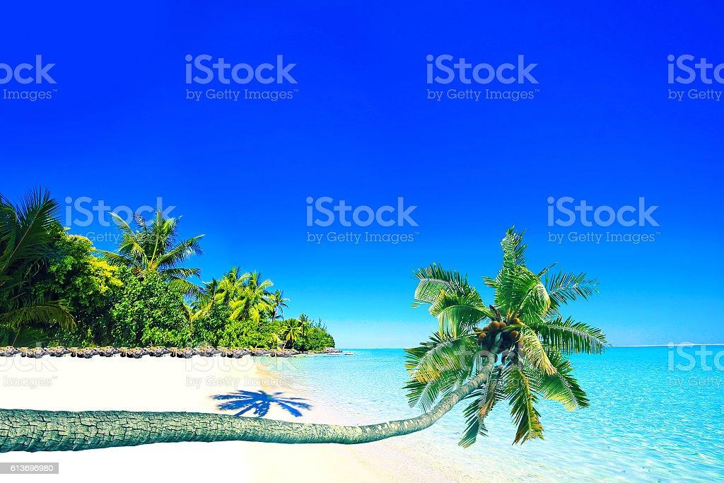 Bora Bora Tahiti Tropical Paradise Palm Tree stock photo