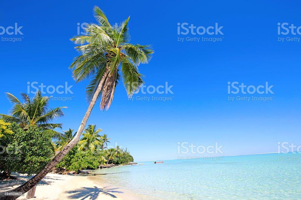 Bora Bora Tahiti Tropical Paradise Palm Trees stock photo