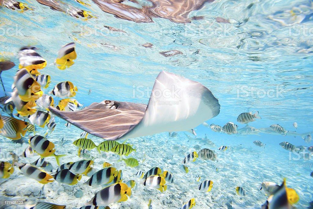BoraBora underwater stock photo