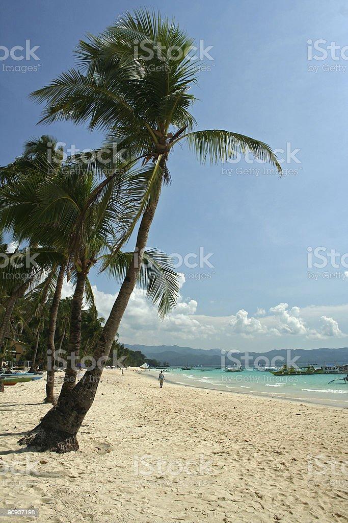 boracay island palm trees royalty-free stock photo