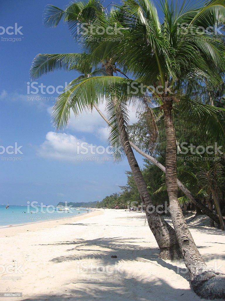 boracay white beach palm trees philippines royalty-free stock photo