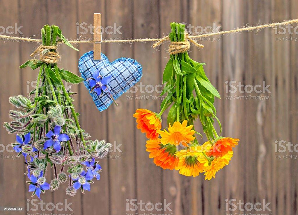 Bourrache et marigolds photo libre de droits