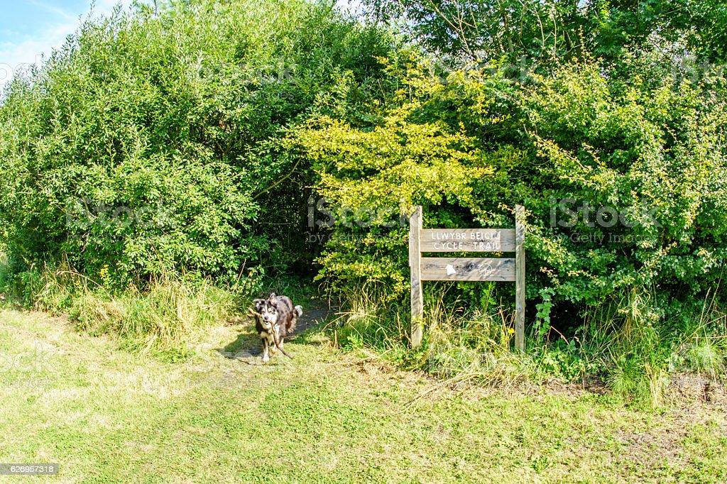 Border collie running on grassy headland stock photo