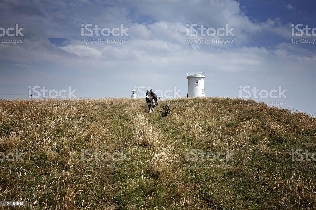 Border collie running on headland royalty-free stock photo