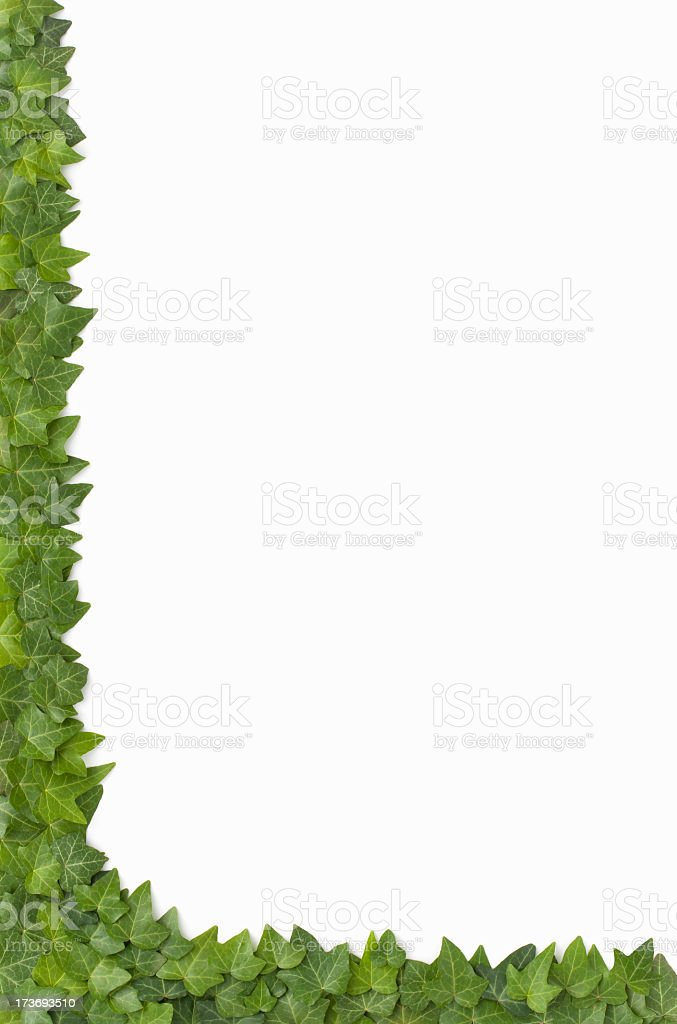 Border - Live English Ivy Corner on white background royalty-free stock photo