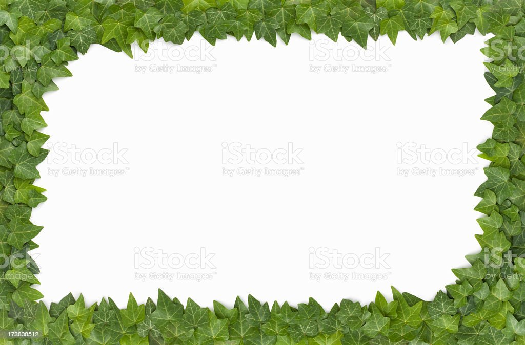 Border - Live English Ivy Surrounds a white background royalty-free stock photo