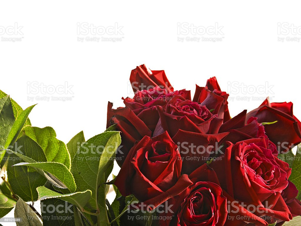 Border of a bouquet of red roses isolated white background royalty-free stock photo