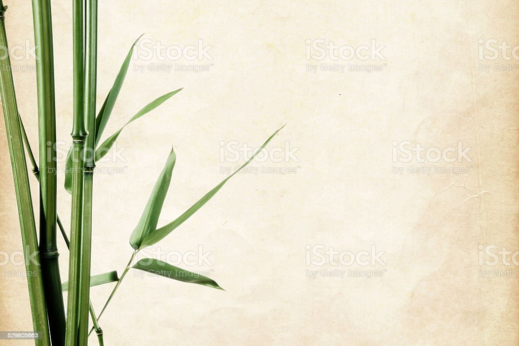 border of bamboo leaves on paper stock photo