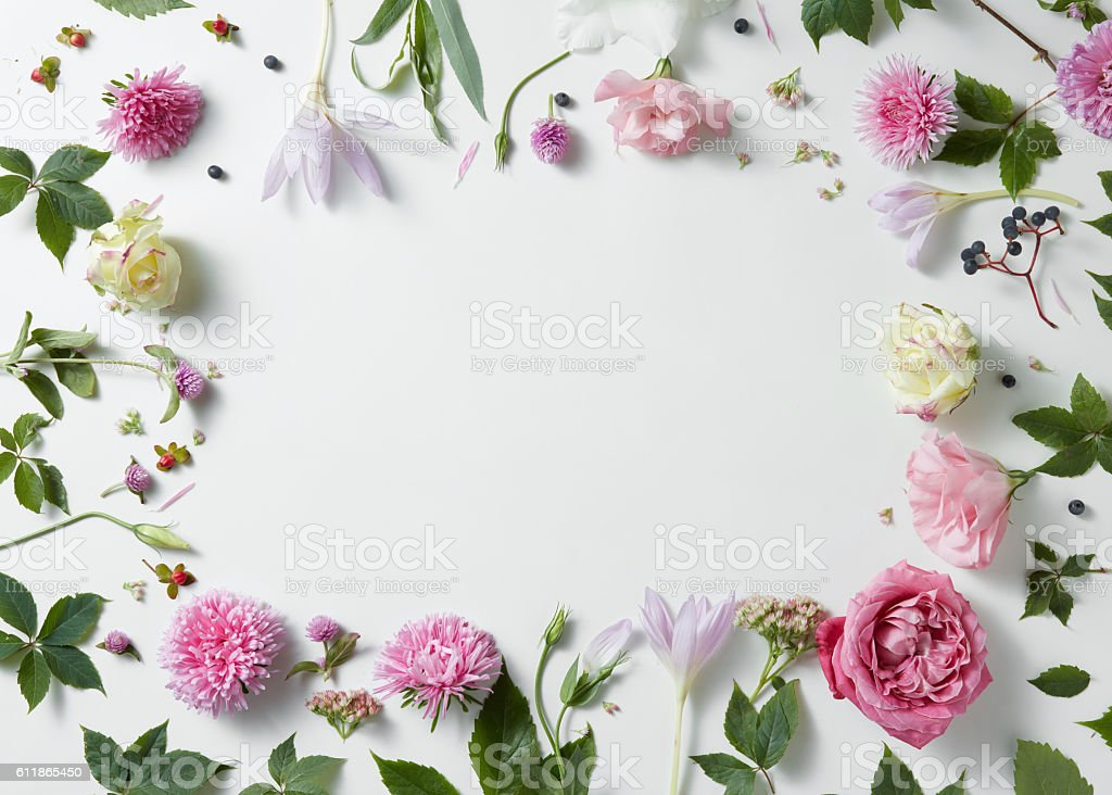 border of pink and white roses with green leaves stock photo