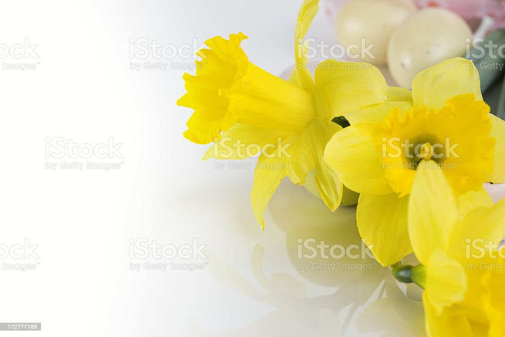Border of Tulips and Easter Eggs on White, Copy Space royalty-free stock photo
